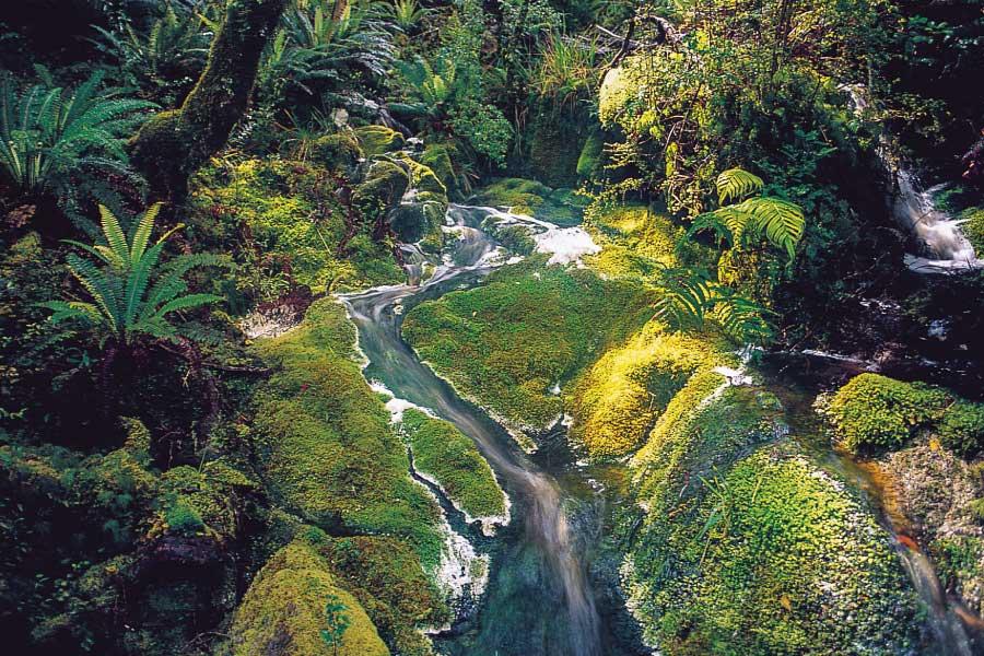 Waitutu Forest Track